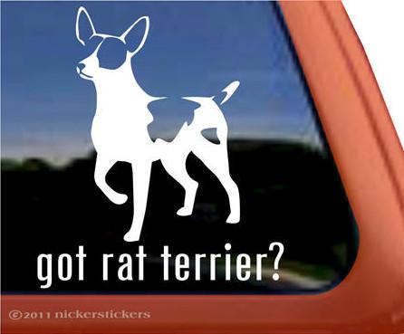 Got Rat Terrier Sticker Die Cut Vinyl rattie